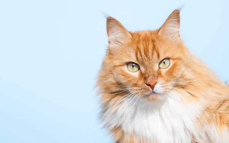 προϊόντα για γάτες